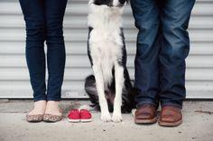 Pregnancy announcement with a dog #pregnancyannouncement #baby #bordercollie