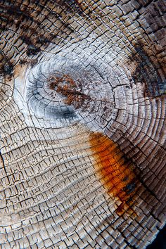 Untitled is part of Texture art - wood Photography Texture Tree Trunks Untitled Wood Texture, Texture Art, Natural Texture, Patterns In Nature, Textures Patterns, Tectonique Des Plaques, Arte Yin Yang, In Natura, Peeling Paint