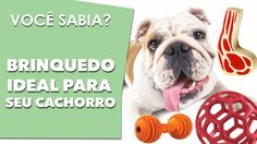 Qual o brinquedo ideal para o cachorro, VOCÊ SABIA?