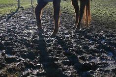 Graze Anatomy: Handling horses on a small acreage - Features - Horsetalk.co.nz
