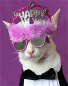 new years cat for more new years cats visit https