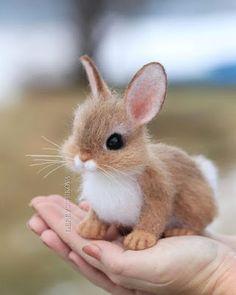 Cute Wild Animals, Cute Kawaii Animals, Baby Animals Super Cute, Cute Baby Bunnies, Cute Baby Dogs, Baby Animals Pictures, Cute Dogs And Puppies, Cute Little Animals, Cute Animal Pictures
