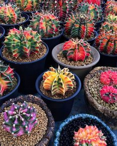 How to start making money with JUICY Succulent Arrangements, Cacti And Succulents, Planting Succulents, Planting Flowers, Cactus House Plants, Cactus Decor, Plant Decor, Mini Cactus Garden, Cactus Planta