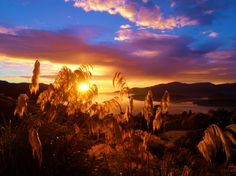 governor's bay-New-Zealand Bay News, New Zealand, Celestial, Sunset, Country, Pictures, Painting, Outdoor, Sunsets