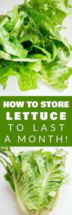 How to Store Lettuce to Last a ENTIRE MONTH!  This easy tip shows you how to wrap your lettuce in aluminum foil to keep it fresh in the refrigerator.  The lettuce stays so crisp after a month I can even use it for salads!