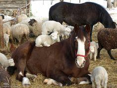 Photo by Kristi Raudsepp - Tori horse