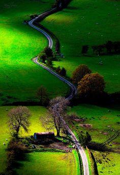 tassels:  Newlands Valley, Lake District, England