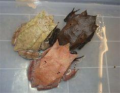 Clayton & Steve's Frog Blog: March 2008