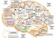Neuromapping! Ahhh!!! I am always wanting to know this!! I have wanted to see a map/diagram of areas of the brain and what they do for SO long!! So interested in this subject. :-) #massageinfographic