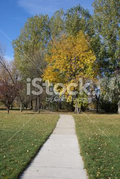 golden tree-vertical Royalty Free Stock Photo