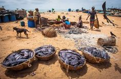 The Fishermen of Negombo, Sri Lanka  Photo by Nora de Angelli - www.noraphotos.com -- National Geographic Your Shot