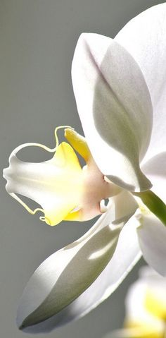 white orchid - great focus flower