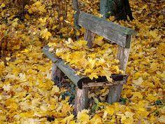 Park Bench, Autumn, Fall Foliage