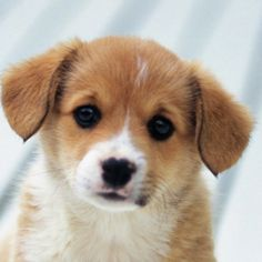 Oh puppy!