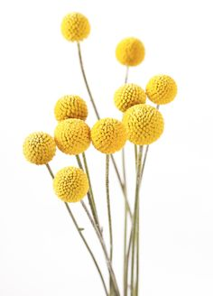 mustard yellow fuzz blossoms for fall decor