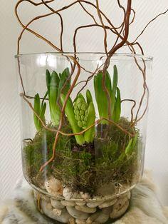 Hyazinthen im Glas # - Garden Types Types Of Flowers, Fresh Flowers, Dried Flowers, Spring Flowers, Garden Types, Deco Floral, Arte Floral, Flower Pot Crafts, Flower Pots