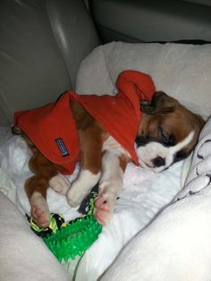 Our Bentley, the day we brought him home!!! March 2013
