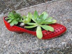 Recycled shoe Hen & Chick planter