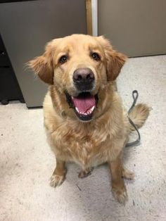 Sawvon has been adopted! This is Sawvon a 4 yr old Golden mix. He is neutered, current on vaccinations. Humane Society of Charles County, Waldorf, MD.