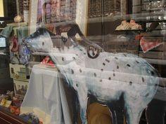 """Ride 'em Monkey"" - store window Lucca, Italy"