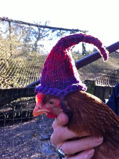 Winter Knits for Chickens - To protect their combs from frostbite.