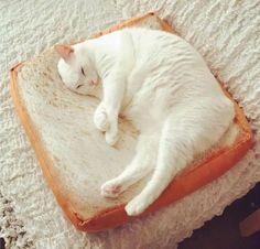 Delicate Bread Toast Pillow Plush Cushion Adorable Pet Mat Stuffed Toys Gift