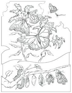 Butterfly Life Cycle Coloring Page Pdf Butterfly Life Cycle Coloring Page Pdf. butterfly Life Cycle Coloring Page Pdf. Best Coloring butterfly Coloring Best Sheet Design Book in butterfly coloring page Butterfly Life Cycle Coloring Page Pdf Life Cycle Coloring Pages at Getdrawings Of Butterfly Life Cycle Coloring Page Pdf Spring Coloring Pages, Heart Coloring Pages, Butterfly Coloring Page, Dog Coloring Page, Animal Coloring Pages, Free Coloring Pages, Printable Coloring, Colouring Sheets For Adults, Coloring Sheets