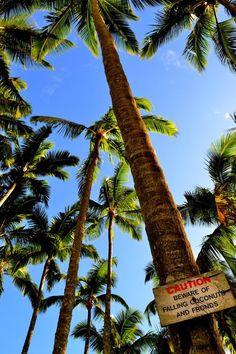 Watch for falling coconuts - the dangers of living in Hawaiʻi! Aloha Hawaii, Hawaii Life, Lonely Planet, All About Hawaii, Tokyo Japan Travel, Beyond The Horizon, Paradise Island, Hawaiian Islands, Big Island