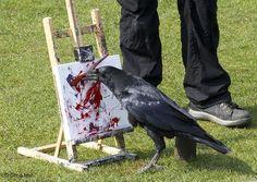 Corvid | Crow | Raven | La Corneille | Il Corvo | 烏 | El Cuervo | ворона | 乌鸦 | https://flic.kr/p/mNe4XF | Clever Corvid | The tropical butterfly and wildlife park North Anston Yorkshie