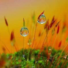 Dazzling Dew Photography - Dien Silver Captures Water Droplets in Spectacular Surroundings (GALLERY)