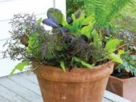 Garden fresh has never tasted better. Fill an 8- or 10-inch pot with soil and sprinkle with a  leaf lettuce  seed mix. These mixes are sometimes sold as a mesclun mix, a cut-and-come again salad mix or  'Healing Hands' mix . Follow seed packet instructions for planting and harvest.