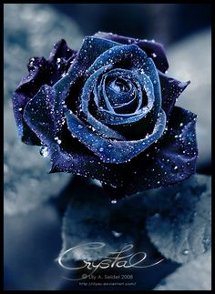 I like the look of the single black rose.