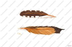 Northern Flicker Feathers by TwoMoonzArt on Etsy, $33.00