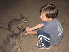 near melbourne-Where can you Pat Kangaroos and other Native Wildlife?