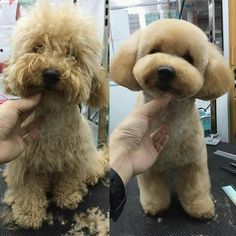 -repinned- Before & after #dog grooming