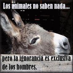 cosas de animales....