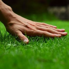 to start a lawn care or landscaping business business . to start a lawn care or landscaping business business . Landscaping Company, Landscaping Tips, Landscaping Calgary, Hillside Landscaping, Lawn Problems, Organic Lawn Care, Mowing Services, Lawn Care Business Cards, Lawn Mowing Business