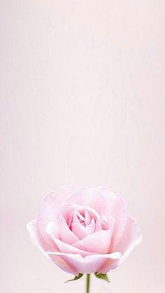 Floral Wallpaper Phone, Rose Wallpaper, Cellphone Wallpaper, Iphone Wallpaper, Wall Wallpaper, Background Flores, Pink Floral Background, Purple Roses, Pink Flowers