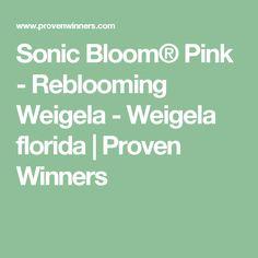 Sonic Bloom® Pink - Reblooming Weigela - Weigela florida   Proven Winners