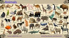 Animals, #Vocabulary #English