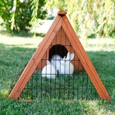 🔥 [NOW CLOSED] =>  If you are crazy in love with easy chicken run Diy, it's totally understandable.Many people bought poor quality chicken pen because they don't know this secret,Click here to discover it now. This won't last long Pvc Chicken Waterer, Chicken Feeders, Backyard Chicken Coops, Chickens Backyard, Clean Chicken, Chicken Pen, Small Chicken, Chicken Wire, Automatic Chicken Feeder