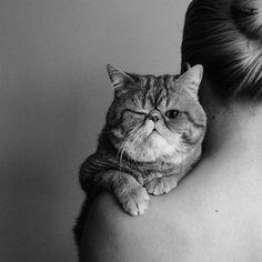 if i ever hav a cat. it will hav a flat face