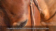 Je vois parfois dans l'œil d'un cheval la beauté inhumaine du monde avant le passage de l'homme.