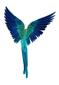 Macaw- this would look cool as a tattoo.