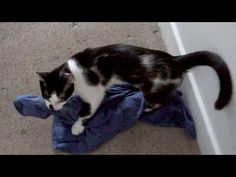 Kitty Helps With The Laundry