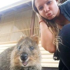 Quokka - the happiest animal on earth  #quokka #quokkaselfie #happy #kiss #hihi #rottnestisland #smile #cute #wa #westernaustralia #australia #aroundtheworld #potd by nini_around_the_world http://ift.tt/1L5GqLp