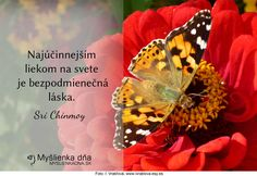 Najúčinnejším liekom na svete je bezpodmienečná láska.Sri Chinmoy