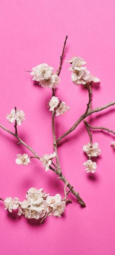 Pink Love, Iphone Wallpapers, Little Things, Floral, Flowers, Photography, Beauty, Jewelry, Pink Walpaper