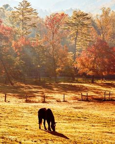 Dawn at Cades Cove Stables - A crisp. misty fall morning near the horse stables in Cades Cove at Great Smoky Mountain National Park. Horse Stables, Horse Farms, Equestrian Stables, Beautiful Horses, Animals Beautiful, Horse Wallpaper, Smoky Mountain National Park, Cades Cove, Great Smoky Mountains