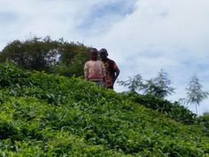 Two of the children atop a tea leaf incline looking toward the stream.